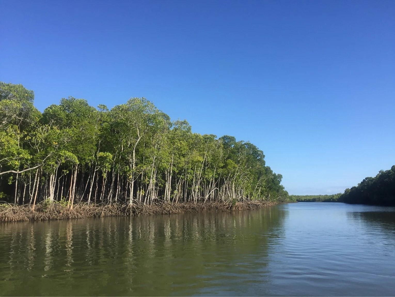 Fiske i Cairns