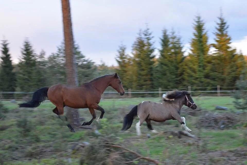Hästarnas schema v21