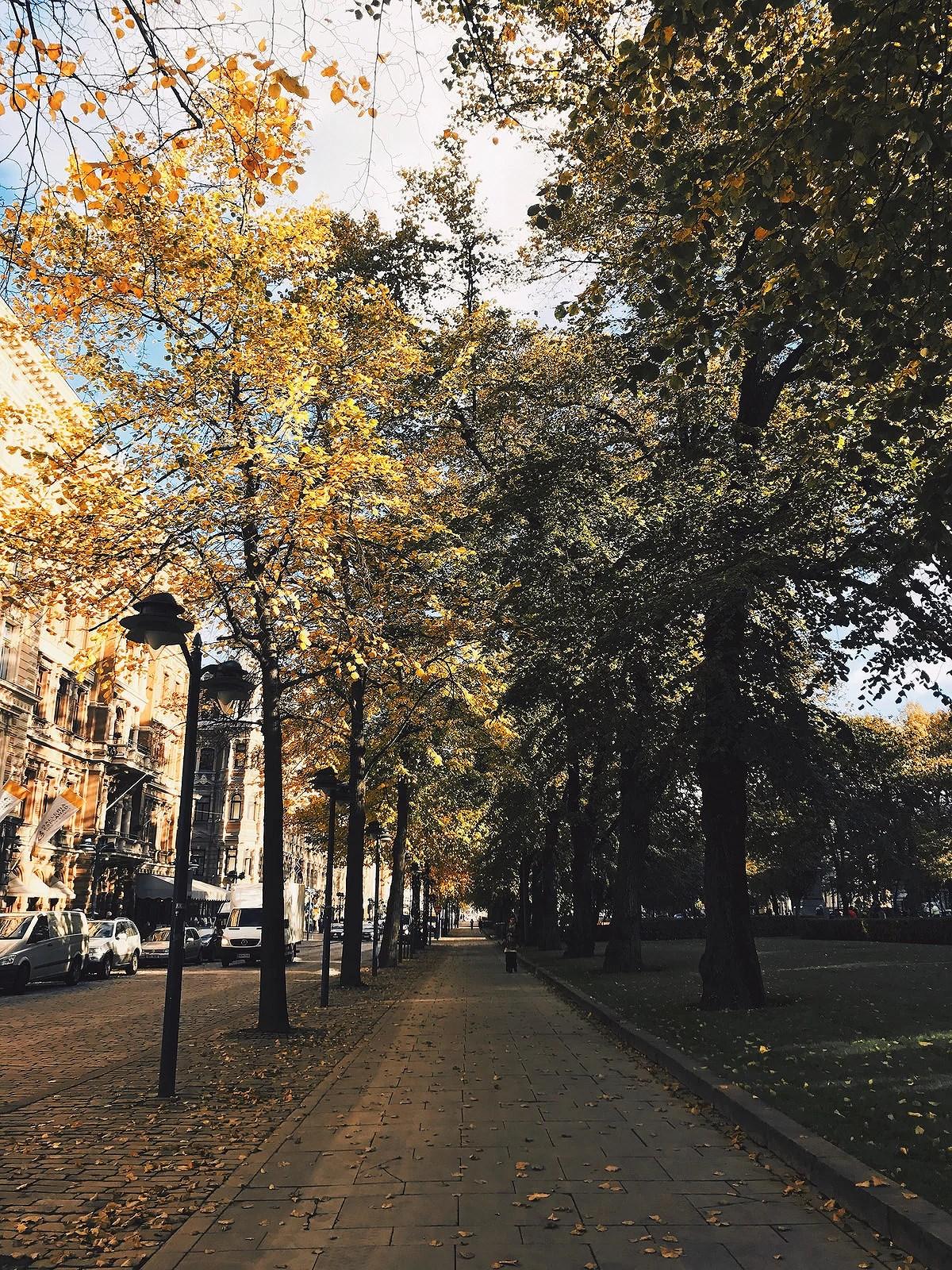 autumniphone6@johannaturpeinen