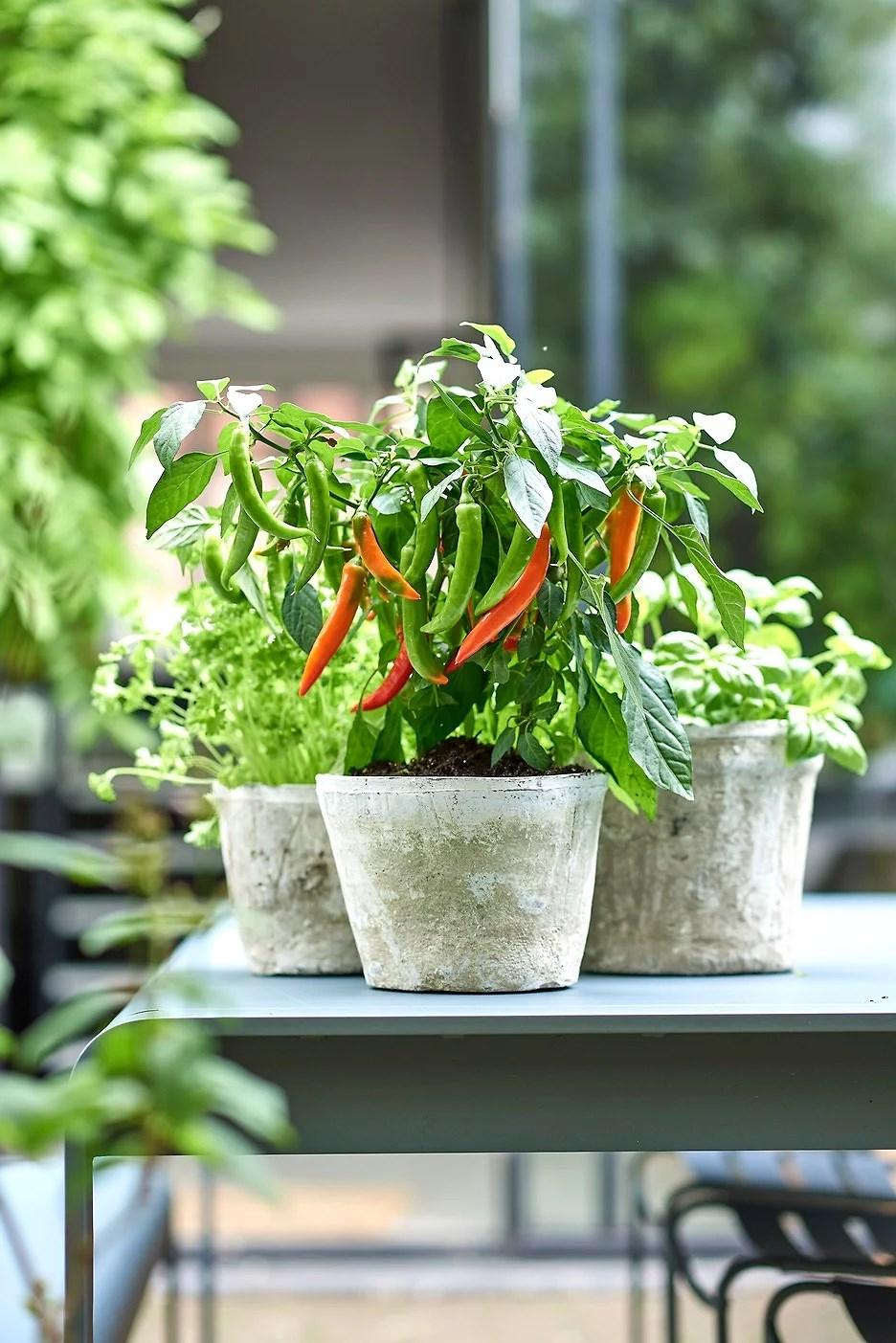 Groenteplantjes op je terras!