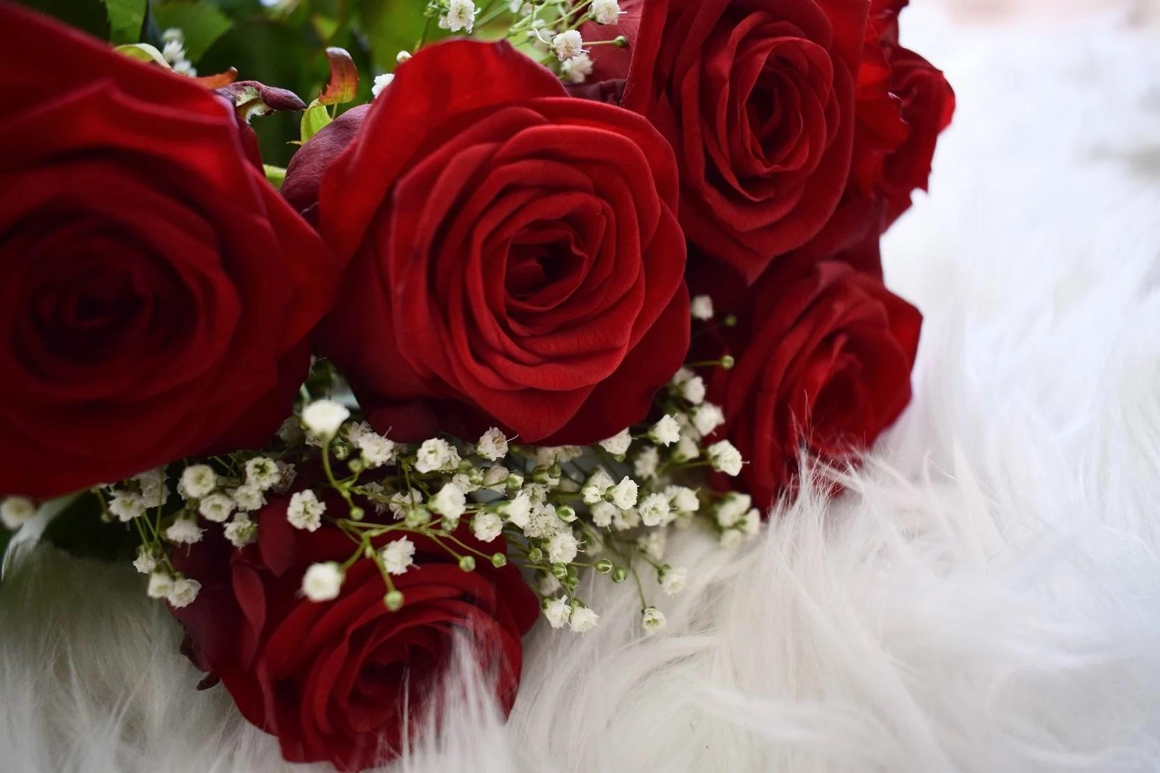 De vackra rosorna!