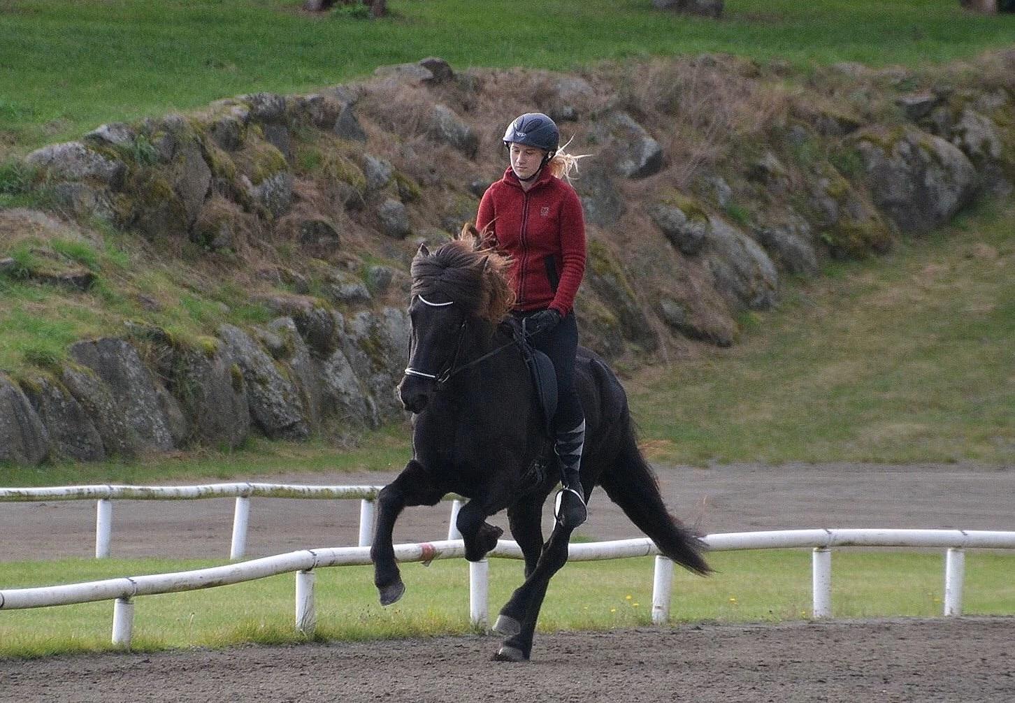 Galopp och förrymda hästar