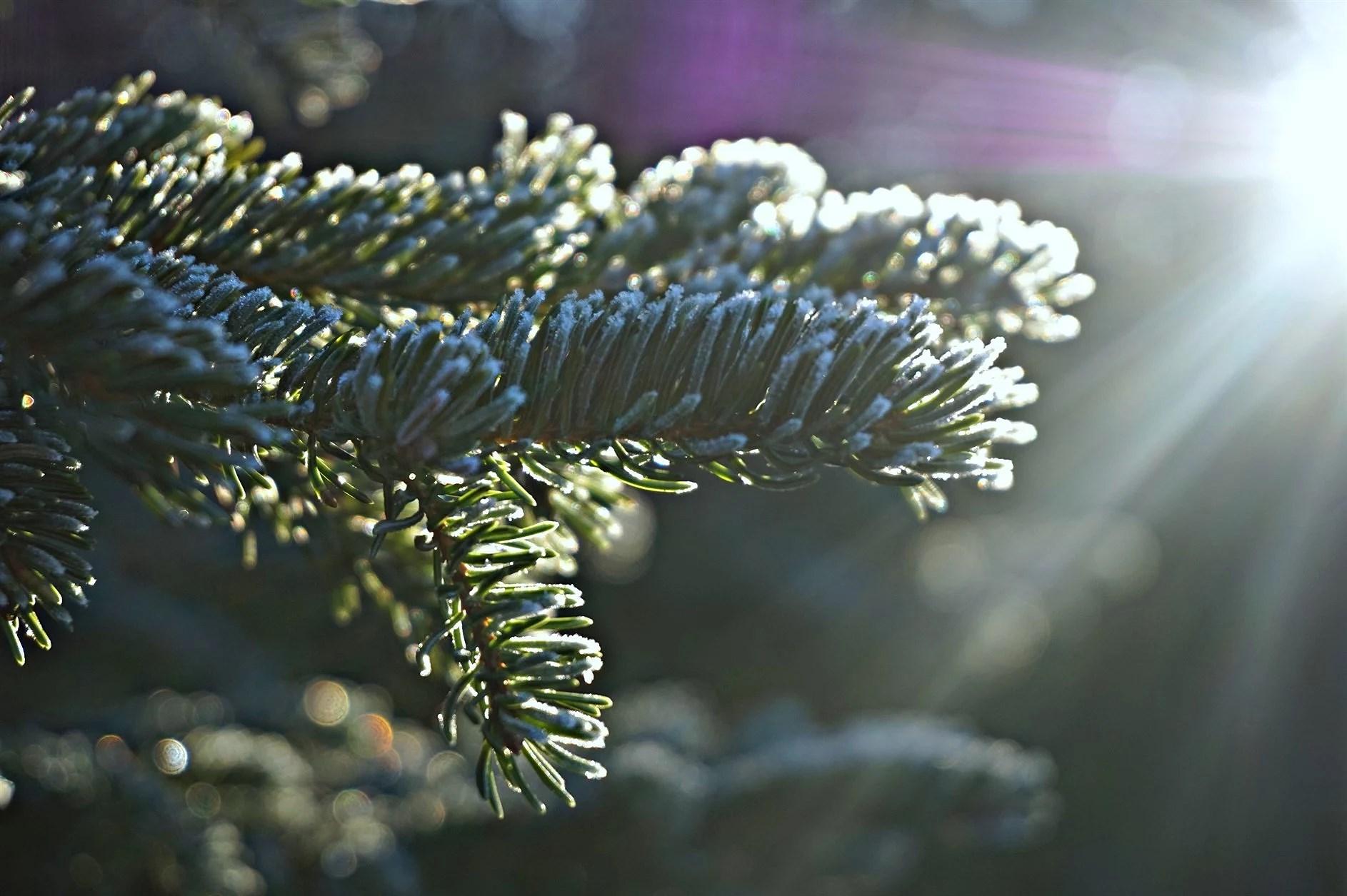 Vackra natur -