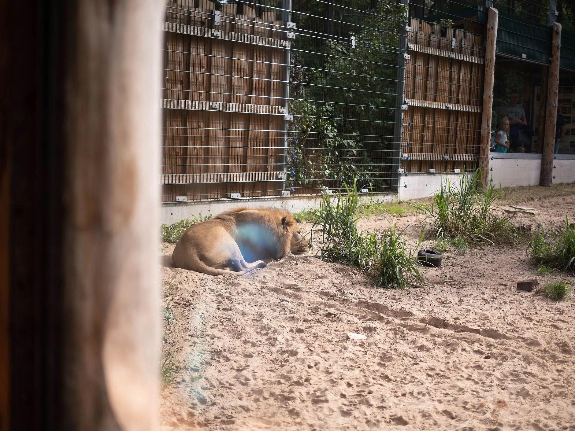 Riga Zoo bildedryss