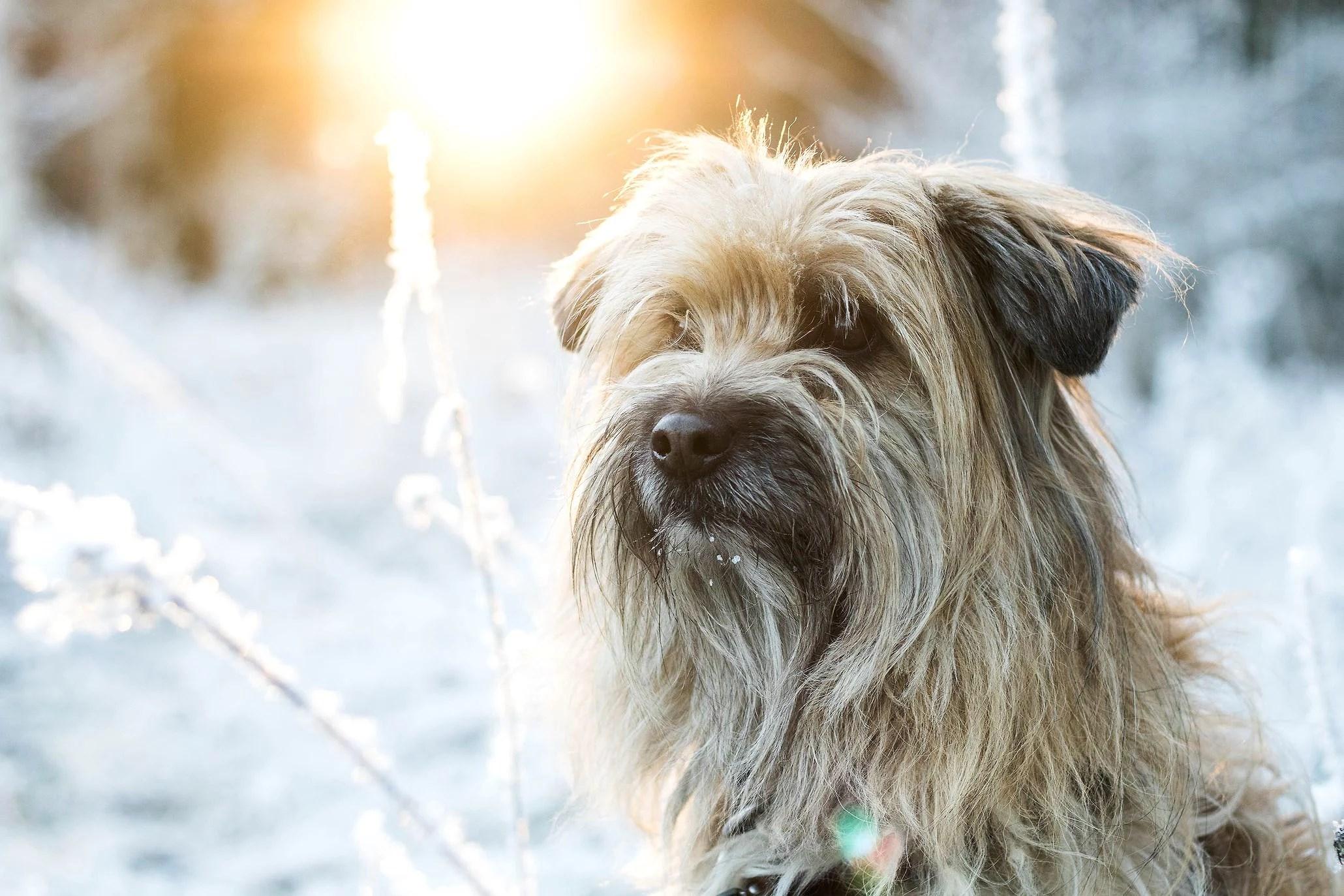 1:a vinterbilderna