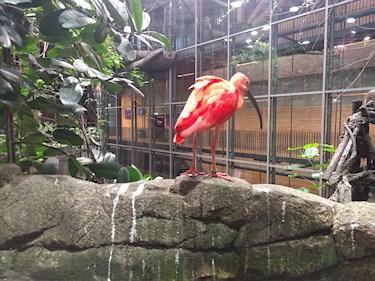 Universeum Göteborg hållbar intressant och rolig semester hemester för barn och vuxna röd fågel i djungeln regnskogen