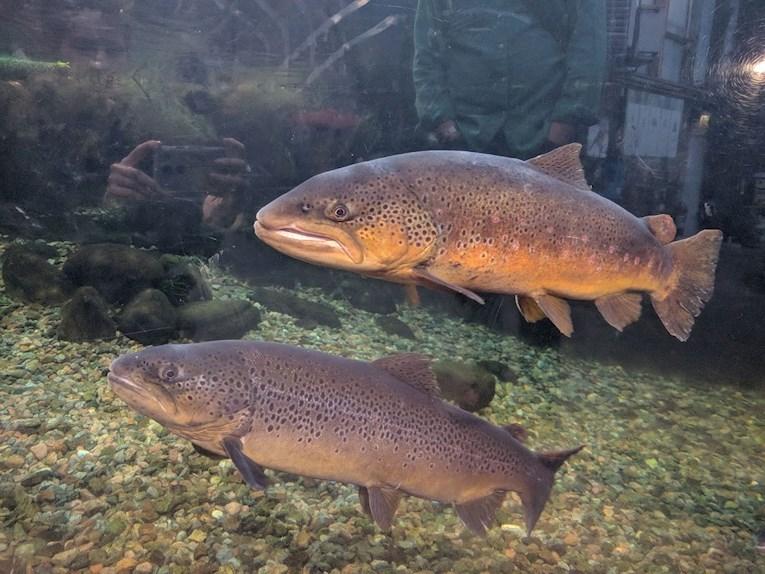 Universeum Göteborg hållbar intressant och rolig semester hemester för barn och vuxna öringar i akvarie.
