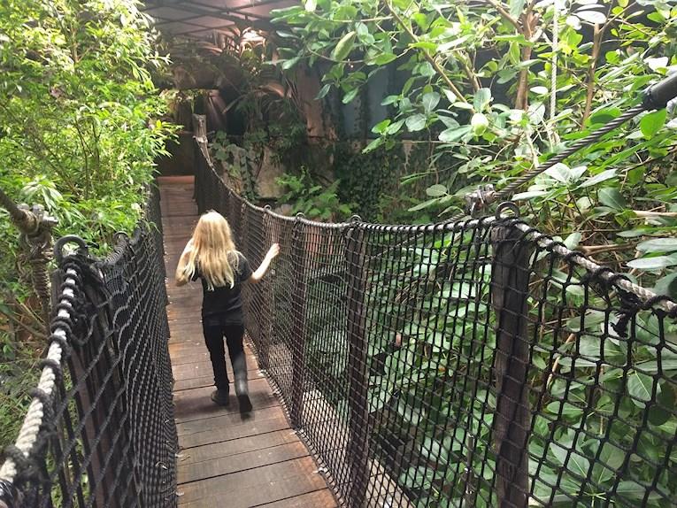 Universeum Göteborg hållbar intressant och rolig semester hemester för barn och vuxna på hängbro genom regnskogen.
