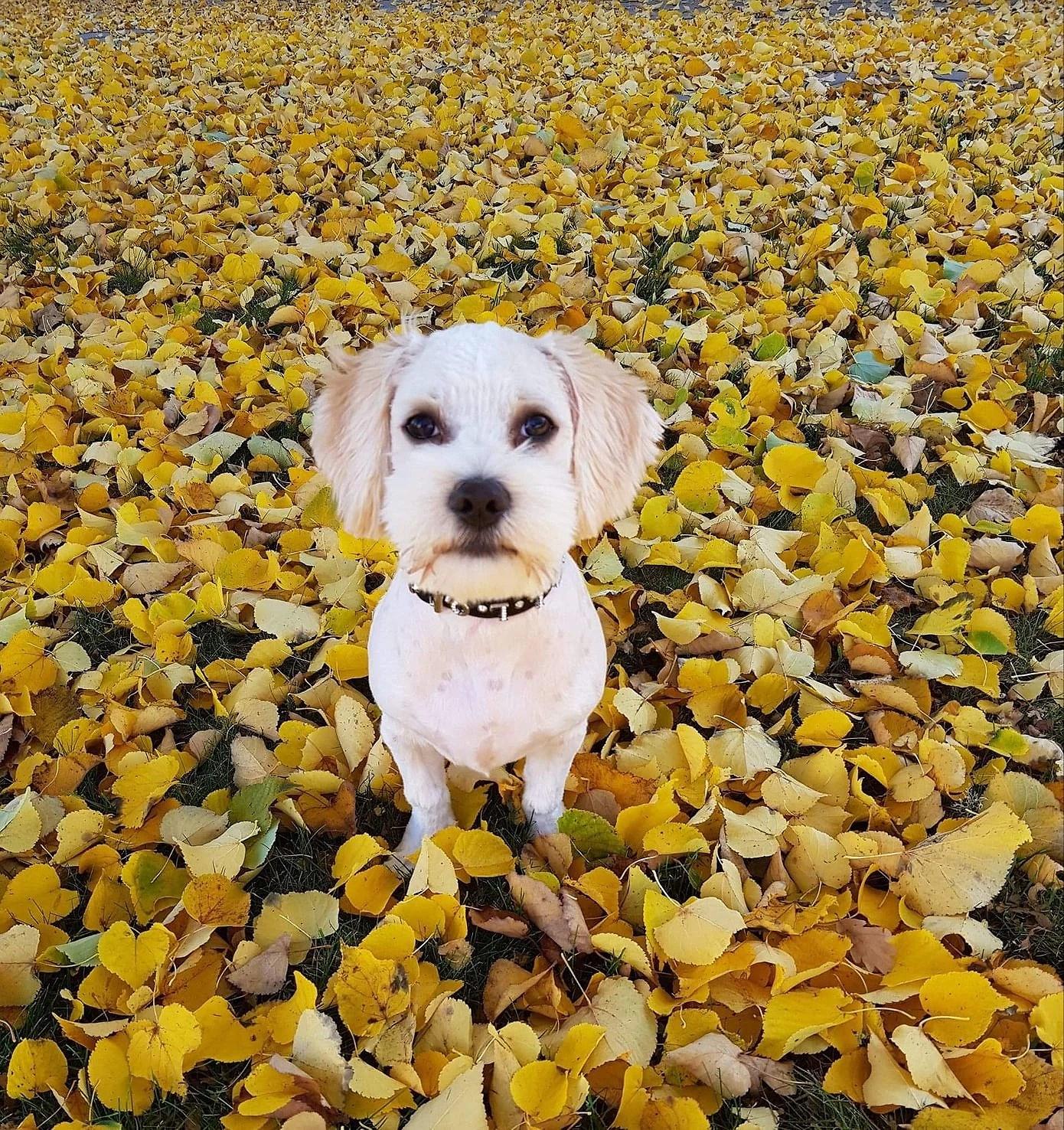 Höstens favoritväder, kalas i Vedum & ett vad!