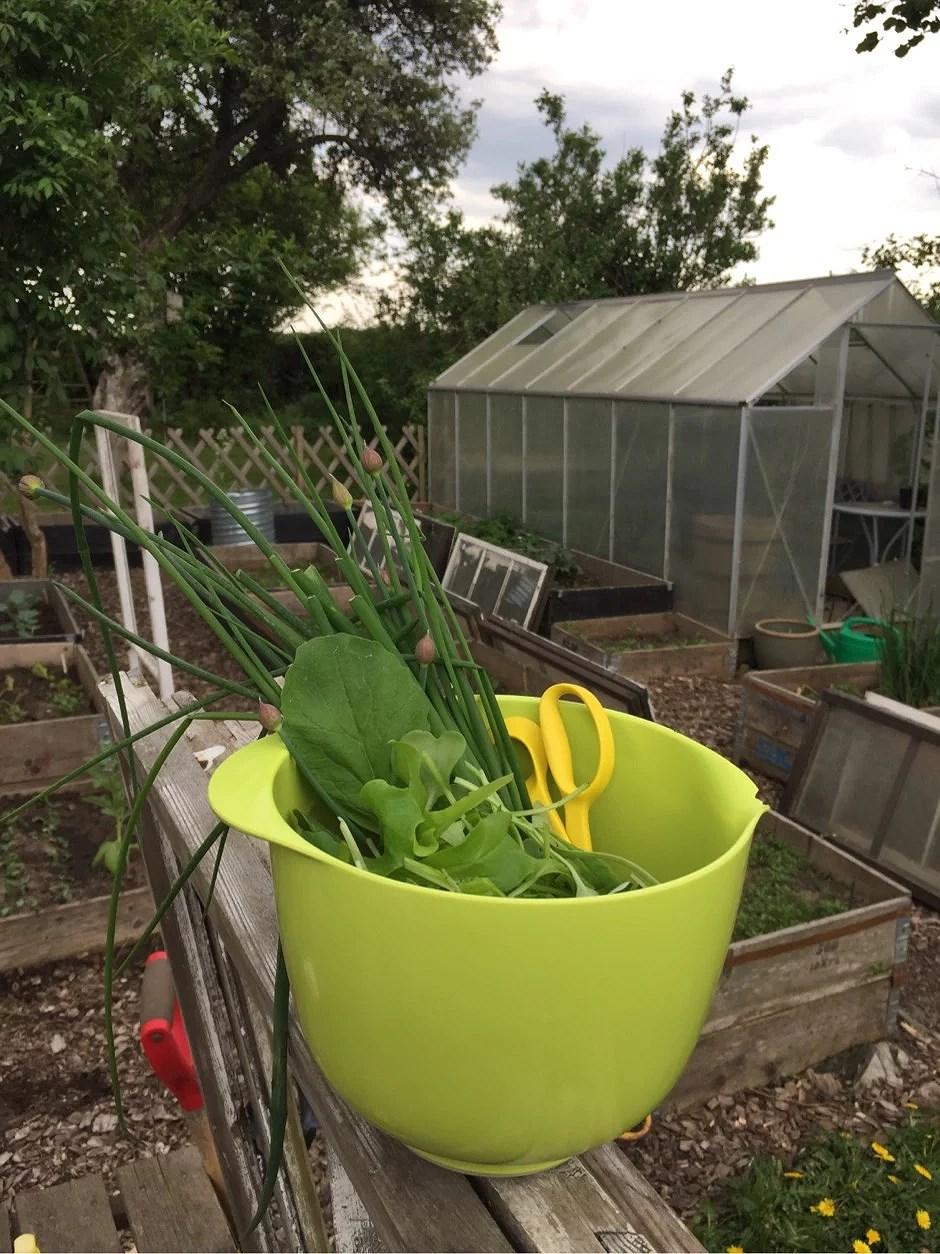 Tidig trädgårds lyx