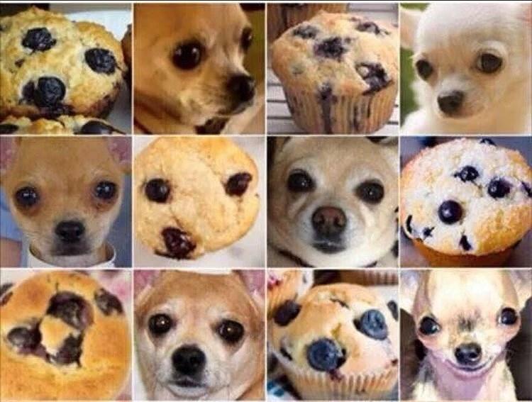 Dog or a muffin