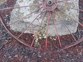 Blombänk nummer två klar