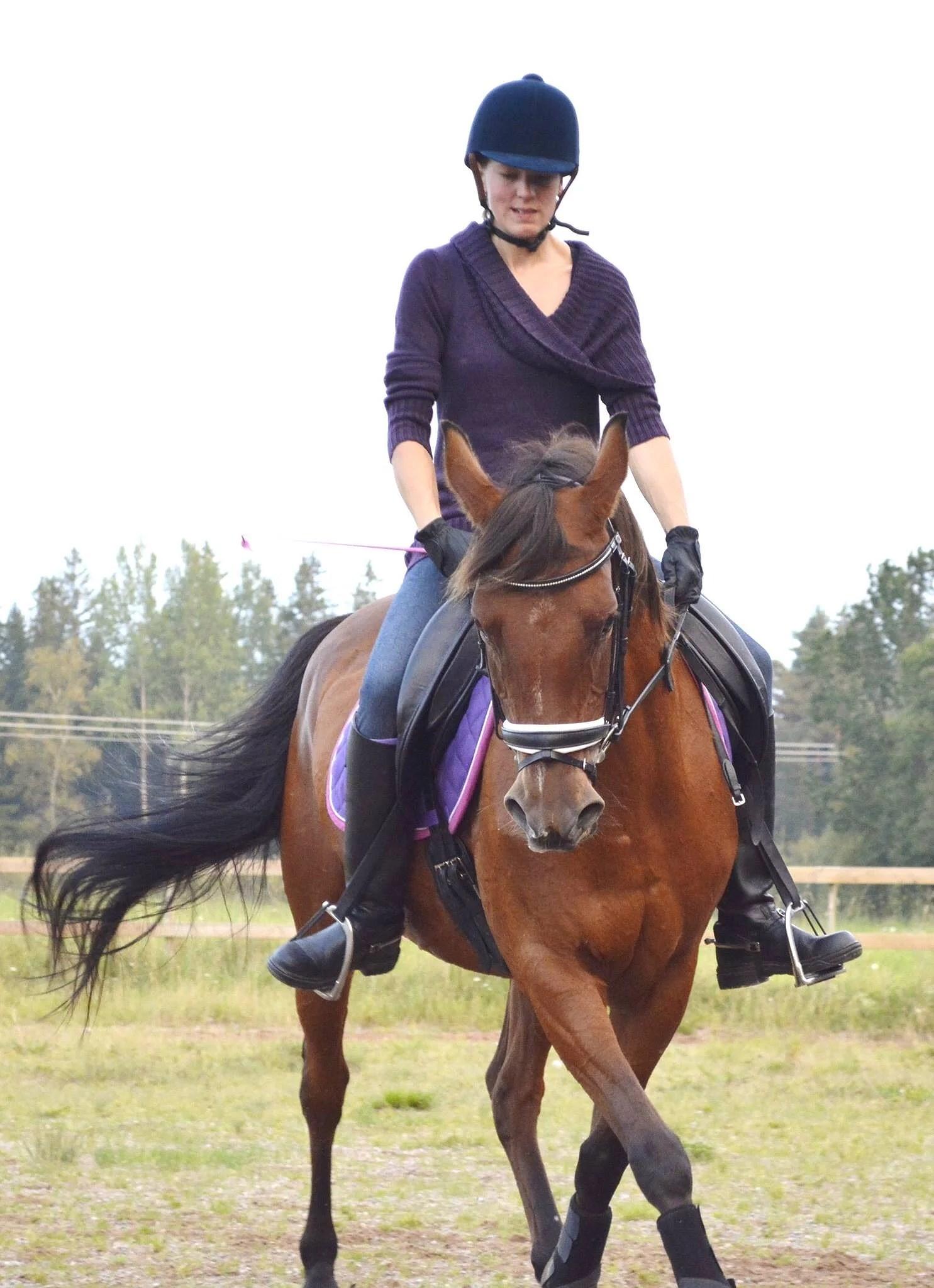 Hästarnas schema v49