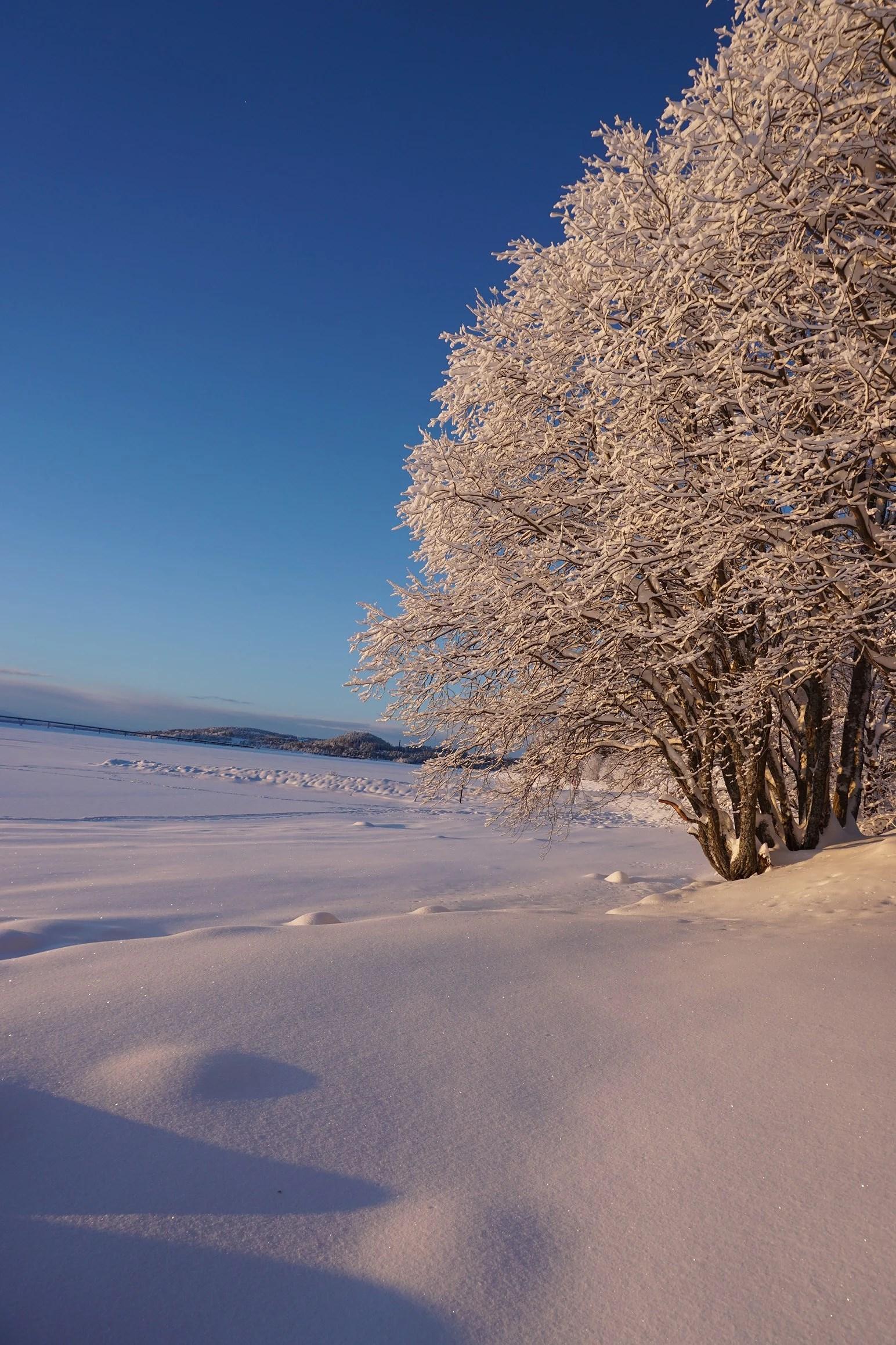Kallt vinterland