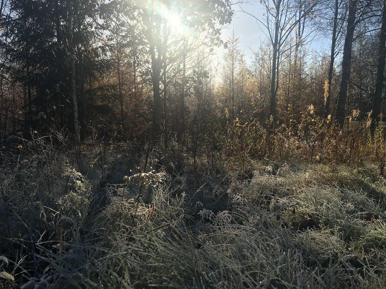 En riktig höstmorgon