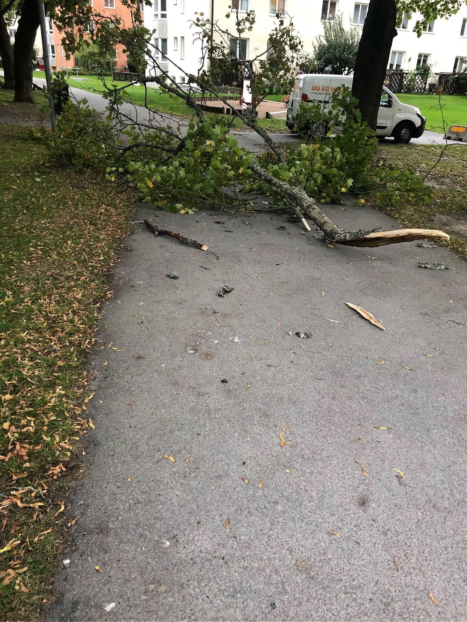 Stormen fortsatte i går