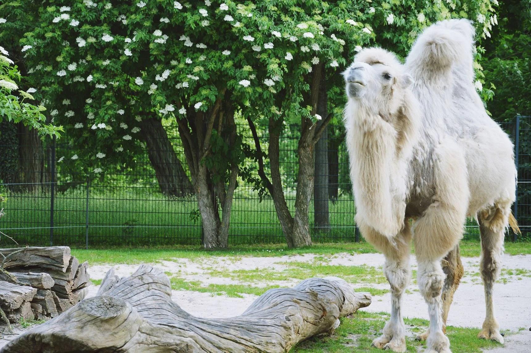 Zoo Stuttgart