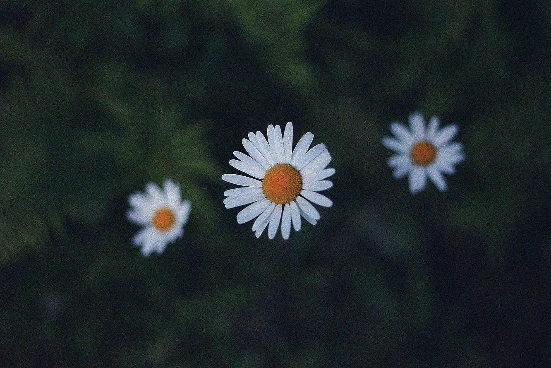 När hoppet dör