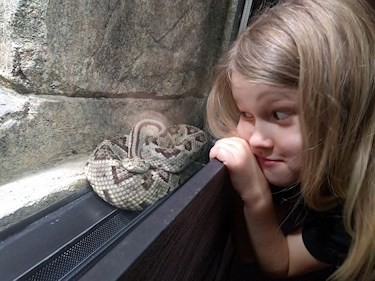 Universeum Göteborg hållbar intressant och rolig semester hemester för barn och vuxna närbild på orm innanför glas.