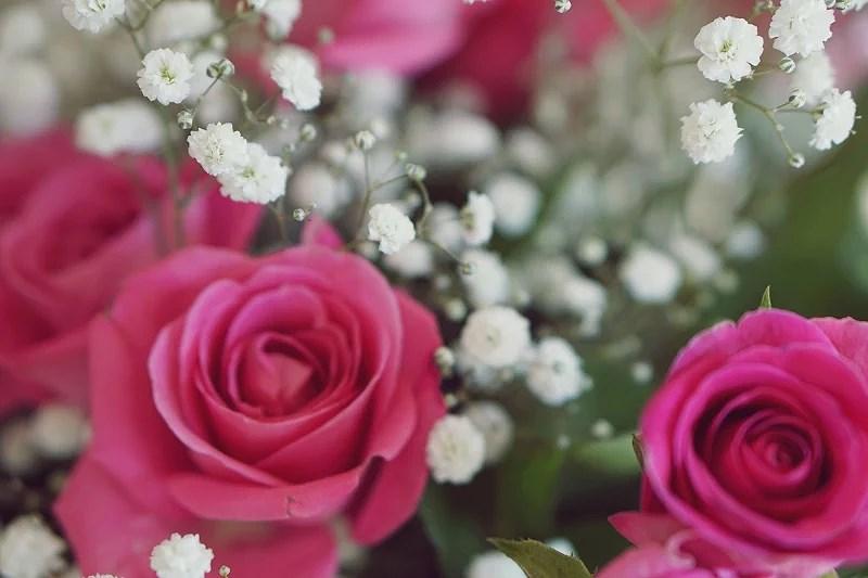 Rosa Gypsophila