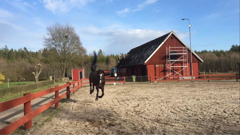 Hästarnas veckoplanering V.16