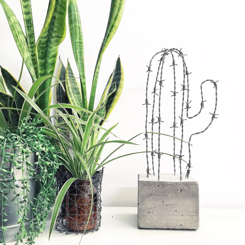 Taggtråds-Kaktus ♦ Beskrivning