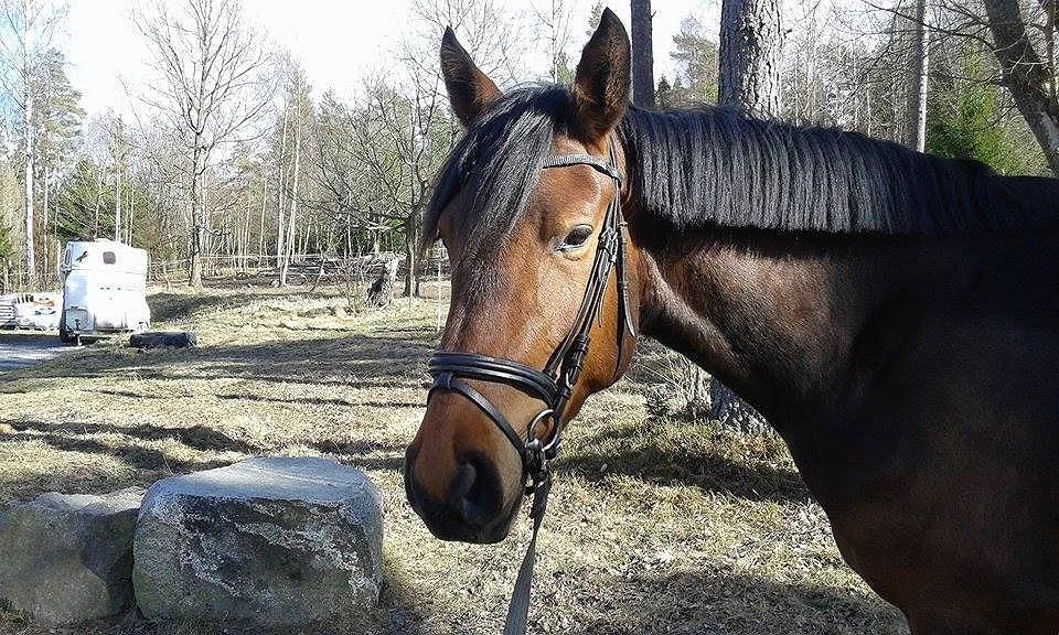 Har jag snart fler hästar att rida på snart......