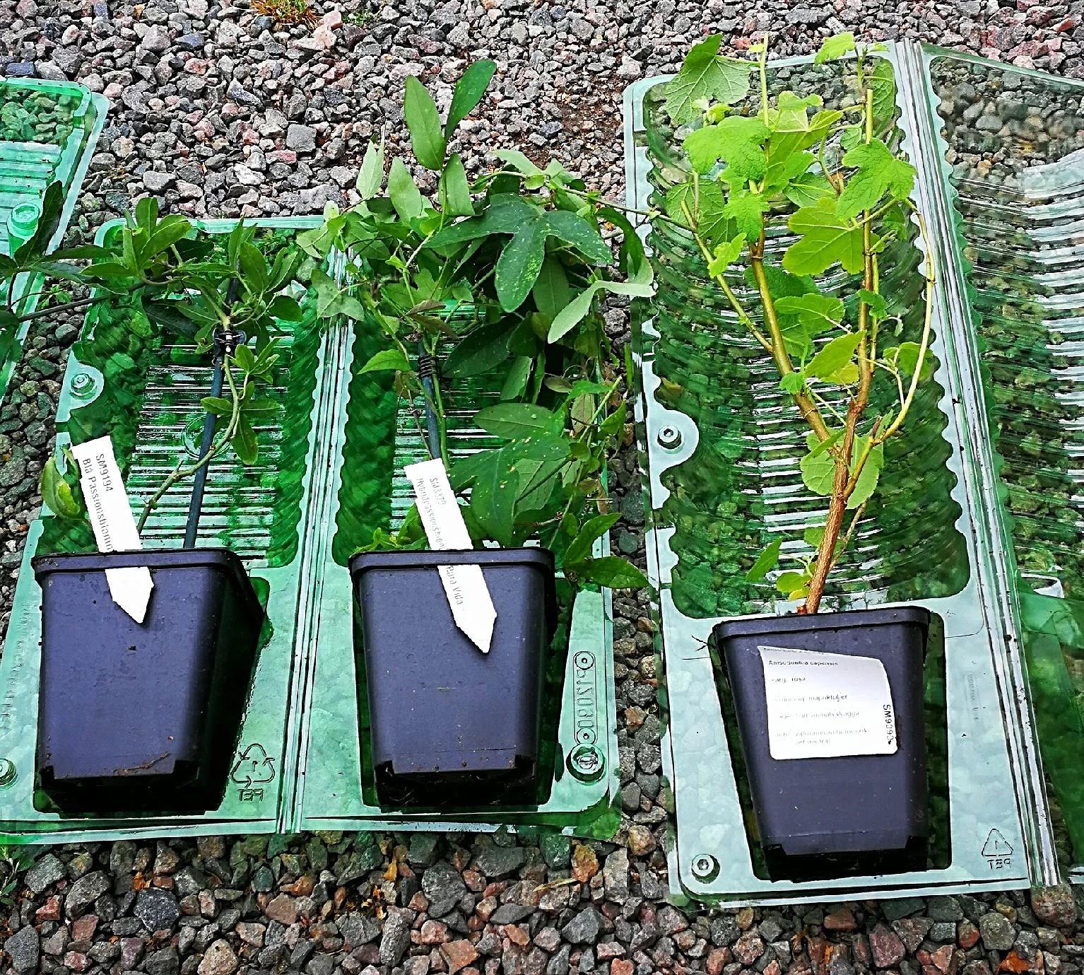 Min senaste beställning från odla