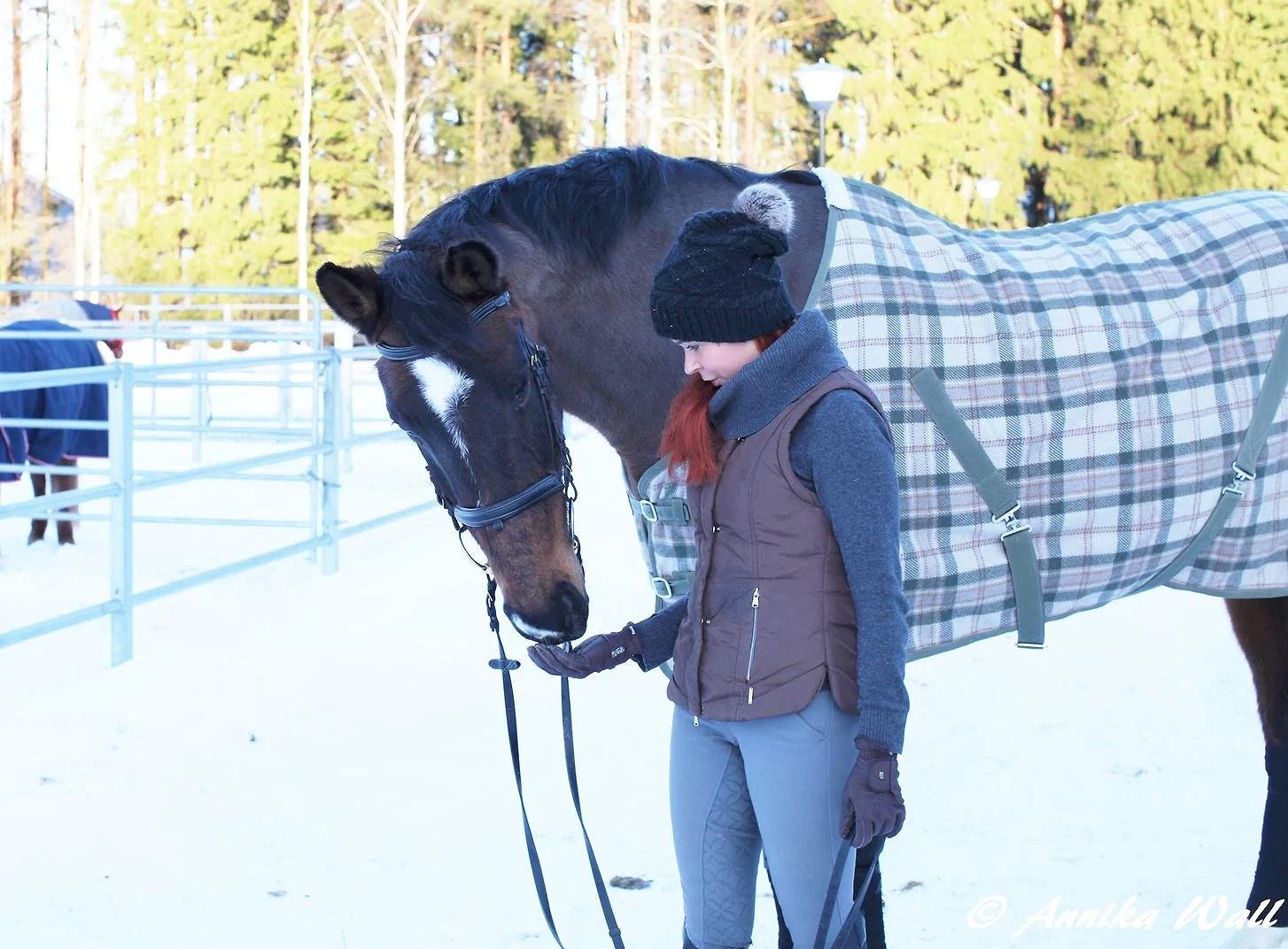 Kiperät hevoskysymykset