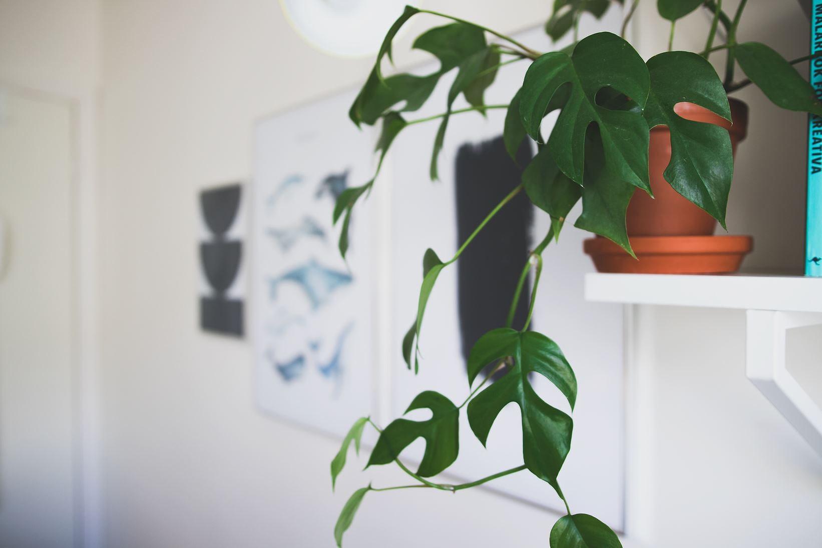 Nytt liv på väggarna med hjälp av tavlor