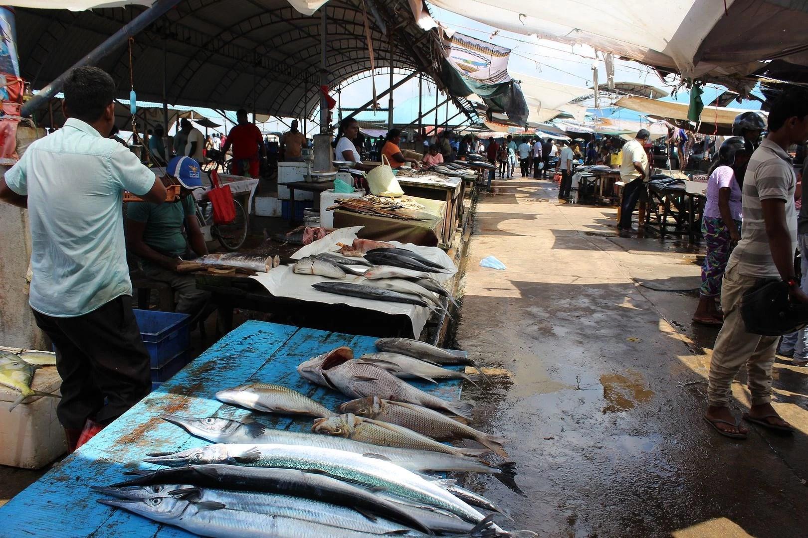 Fiskmarknaden i Negombo