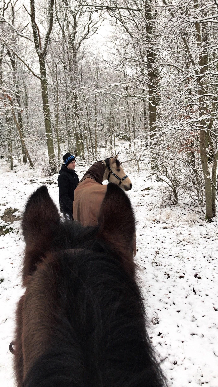 En ponny ut, en ponny in