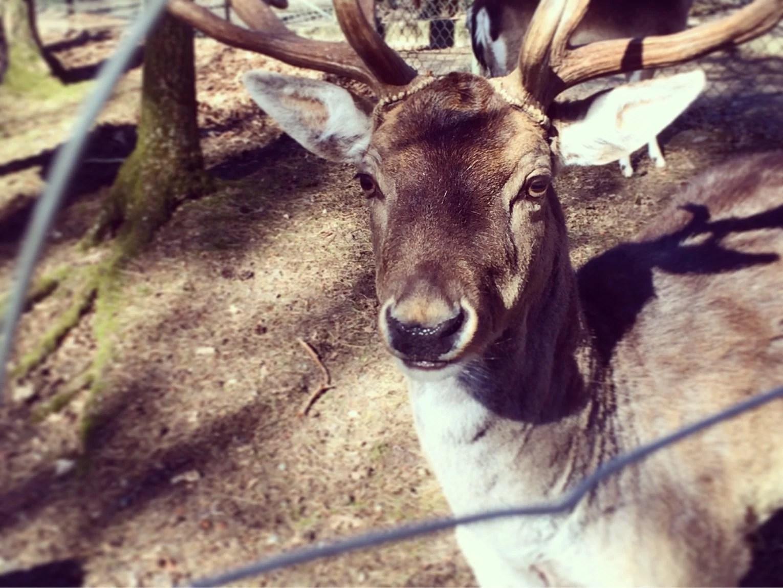 Hembygdsparken -2016