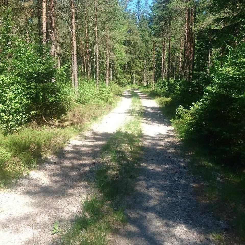 Positiv energi från skogen