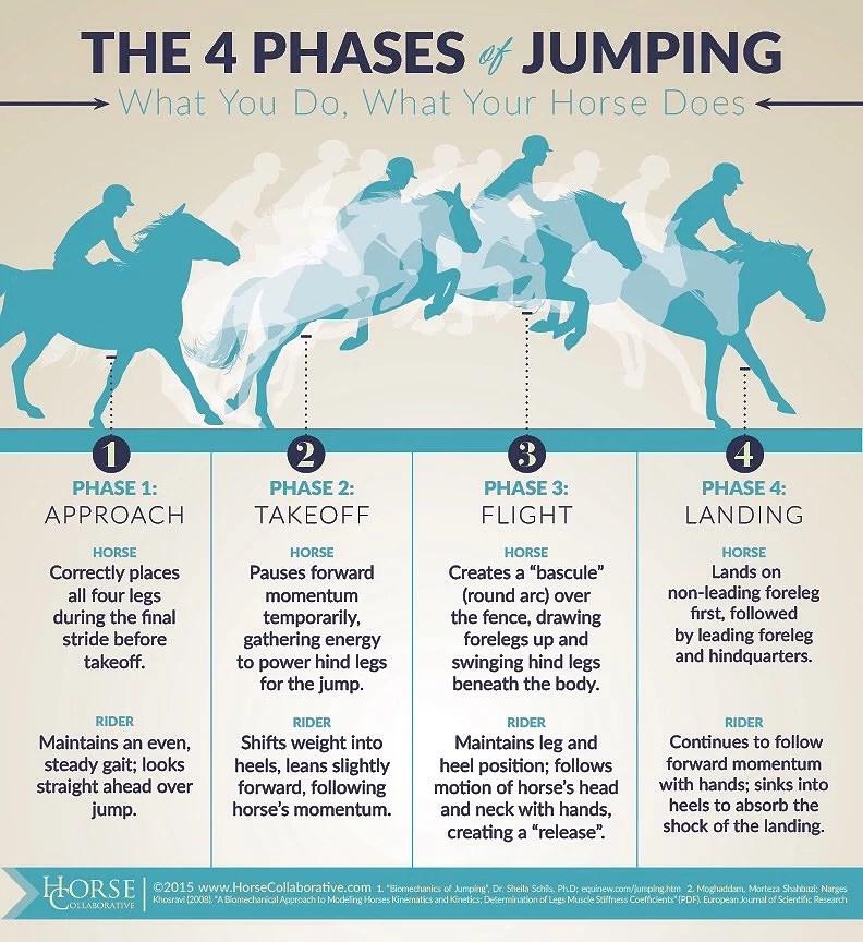 Vad gör ryttaren och hästen under ett hopp?