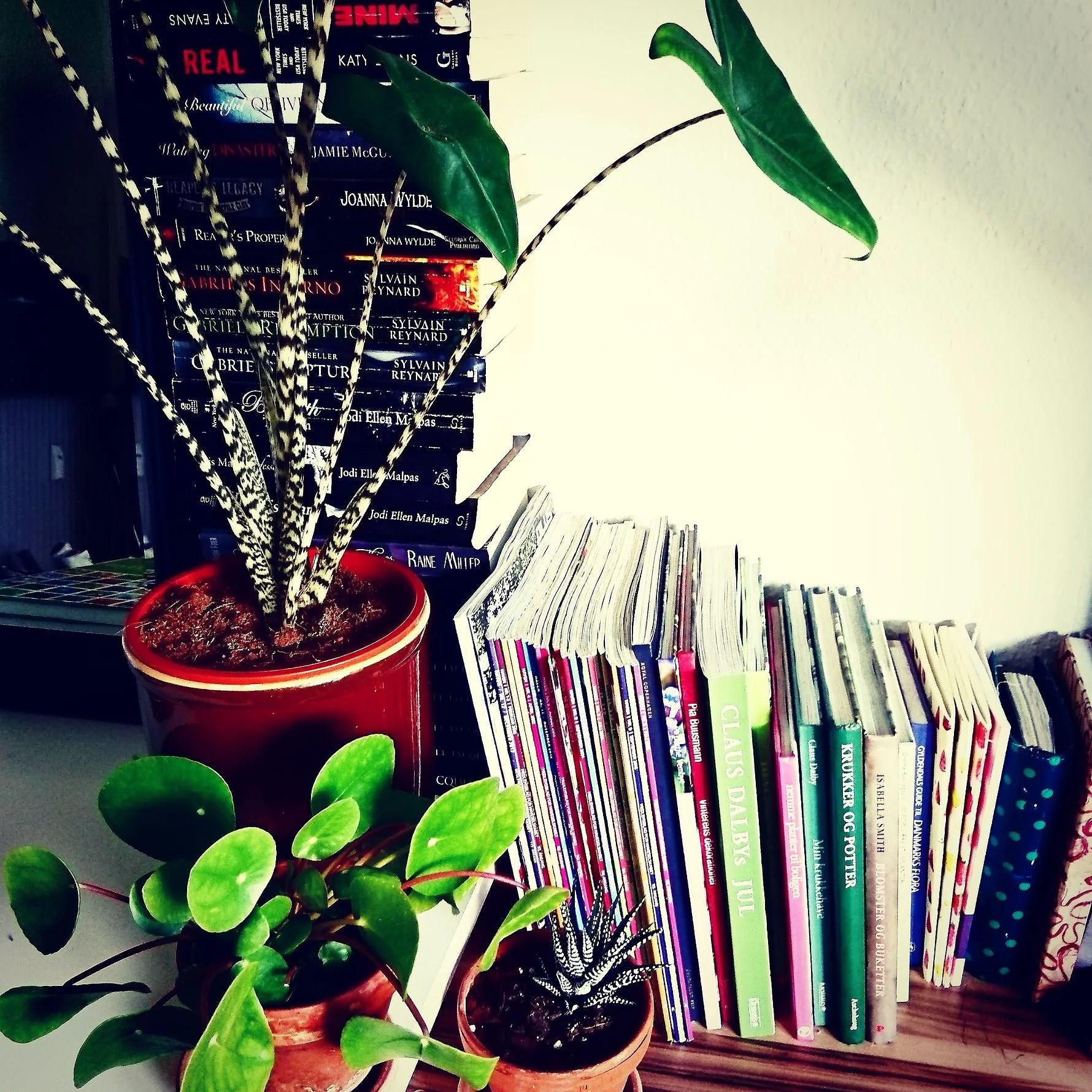 Planteguide..... tilbageblik på nogle af de mest læste planteguides.