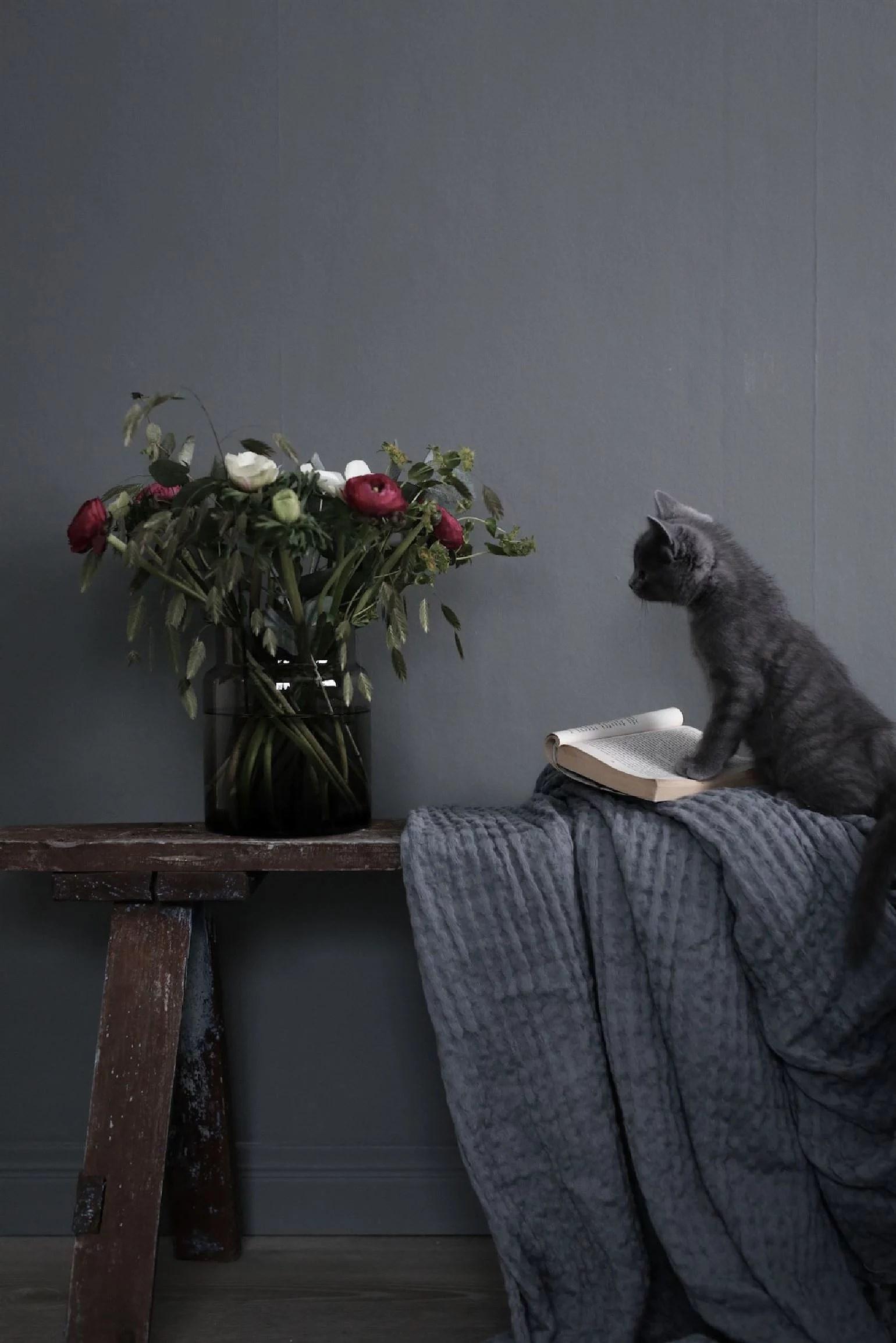 Att fota med kattungar