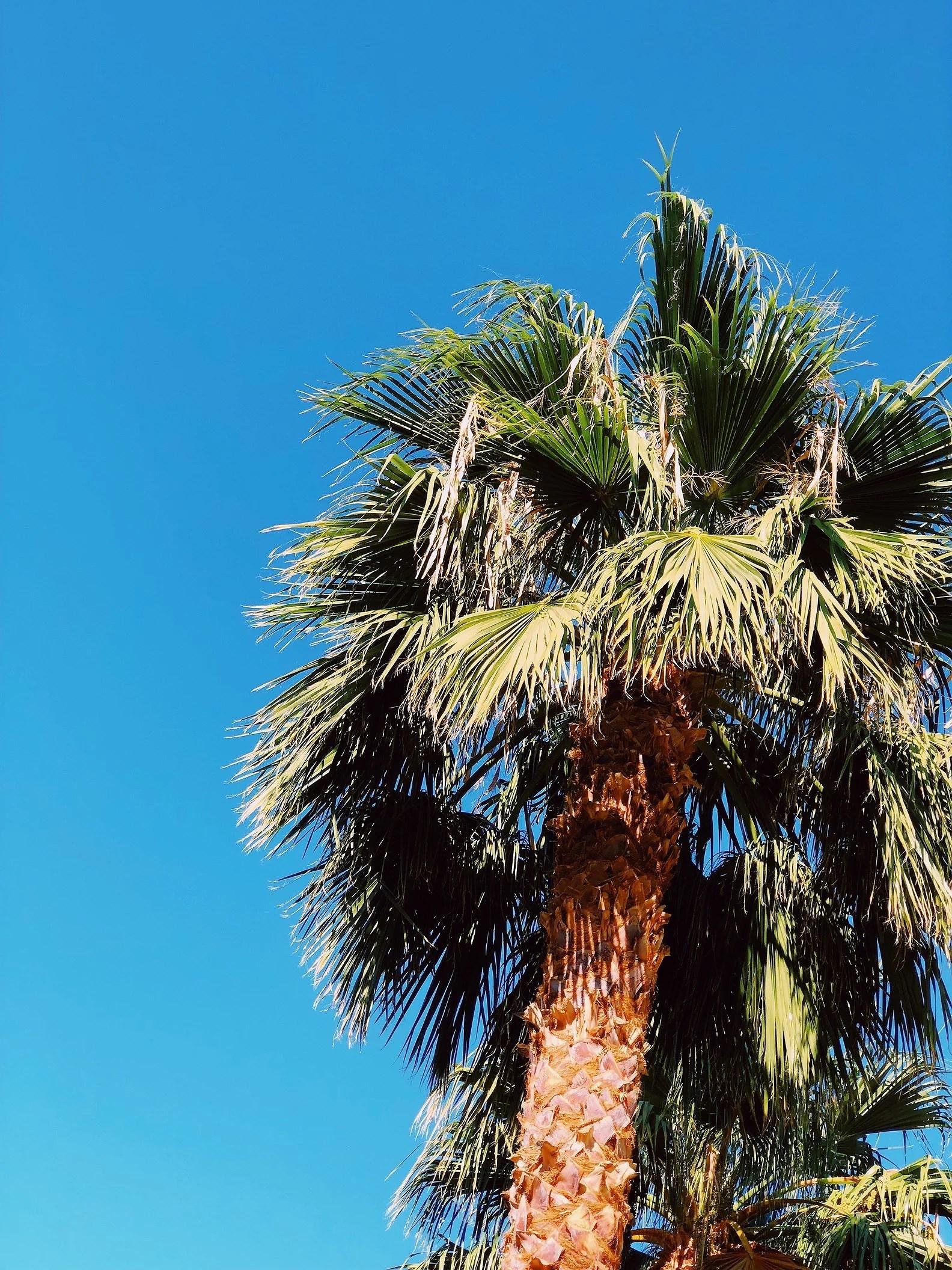 Hastighet dating i Palm Springs ca