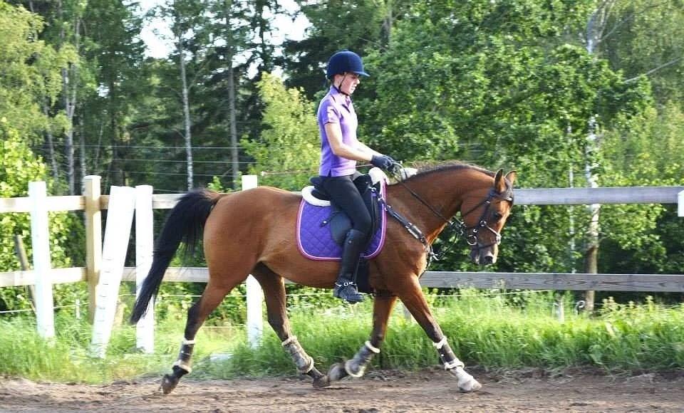 Hästarnas schema v27