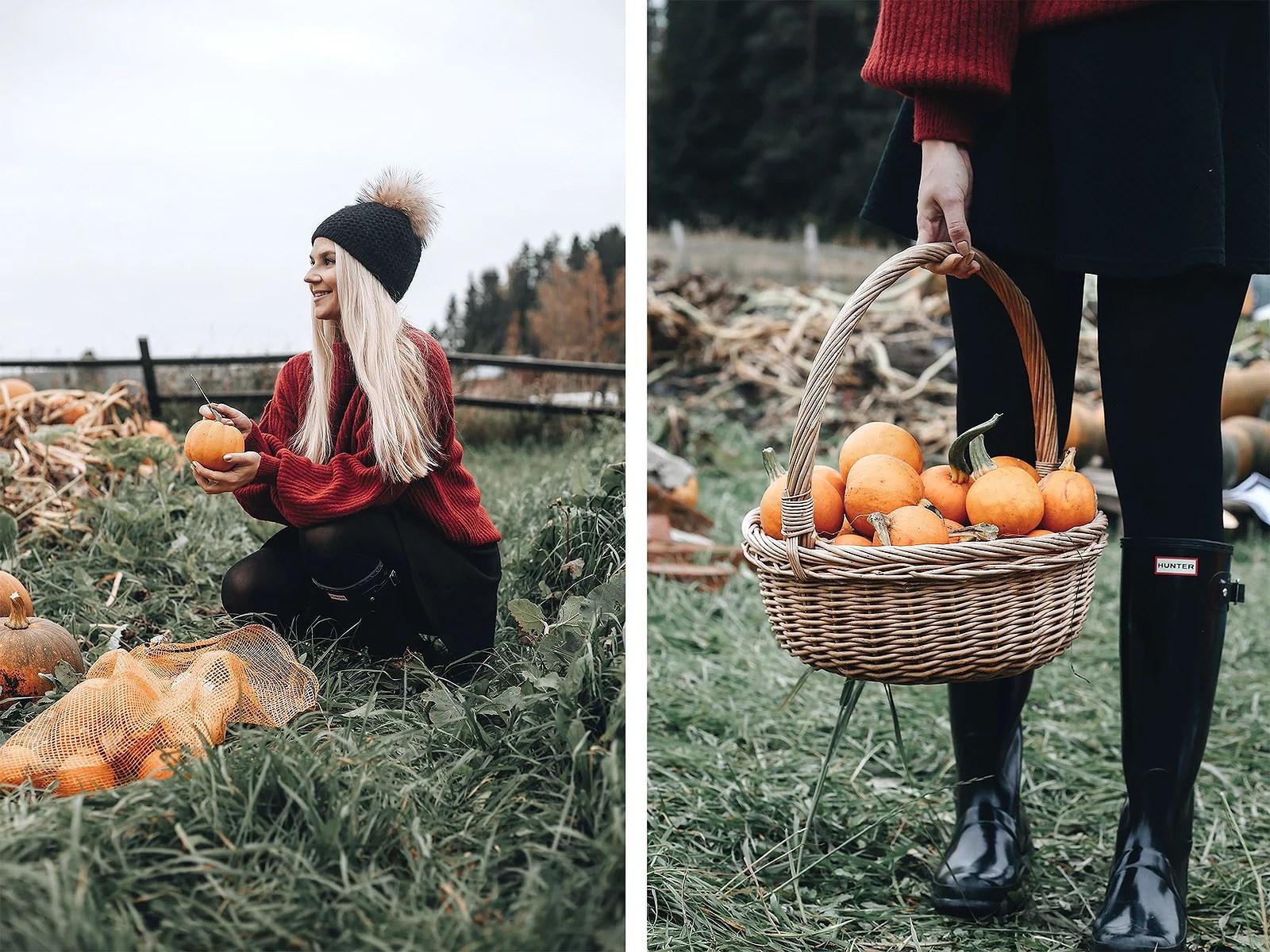 pumpkinpatch3@johannaturpeinen