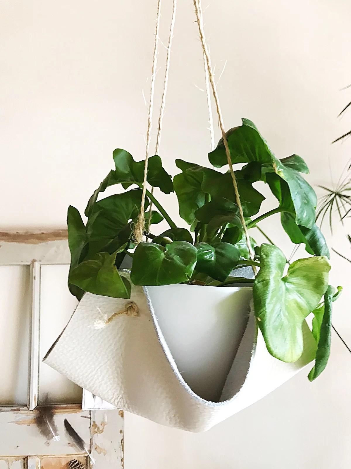 Leren plantendragers