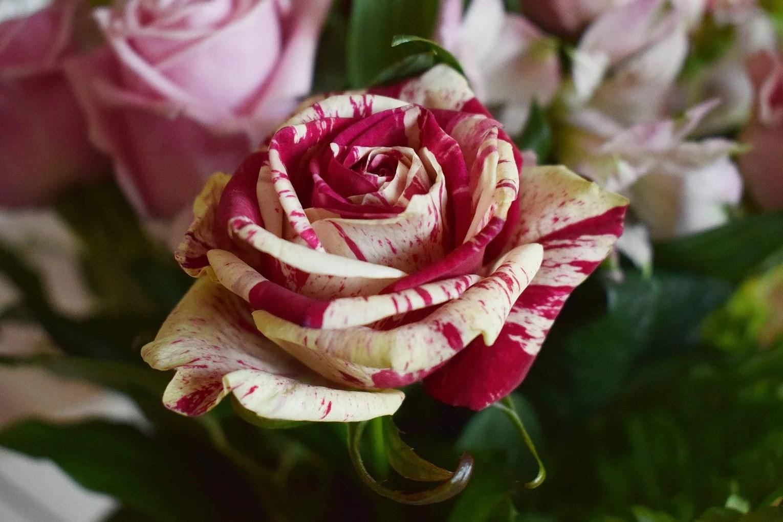 Kiss och blommor