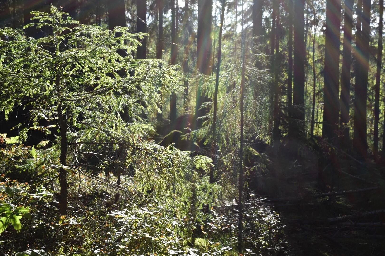 Samla energi i skogen