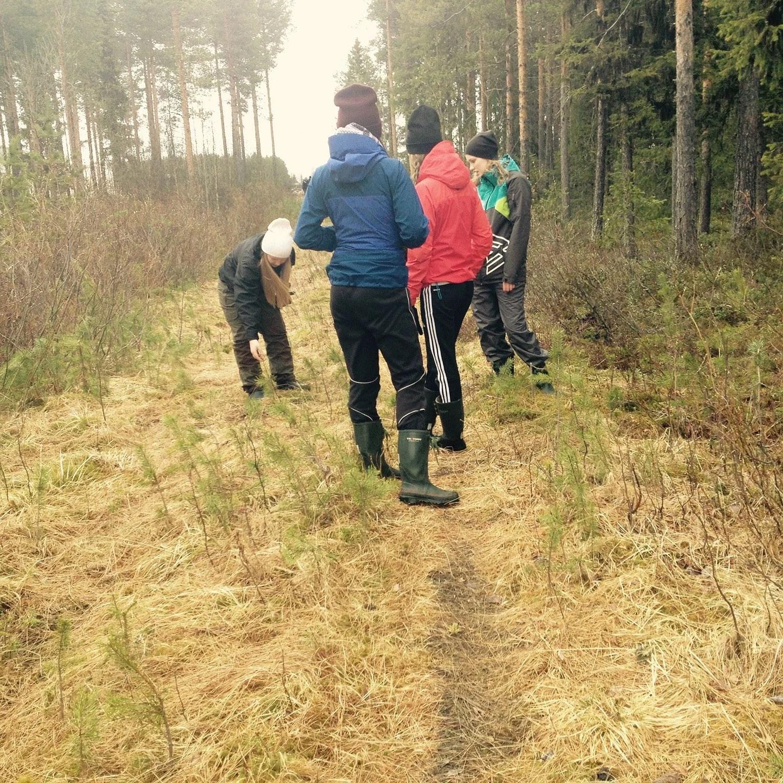 Ute i skogen