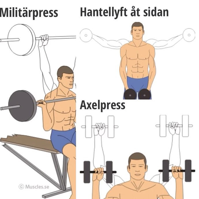 Bildresultat för armmuskel övningar