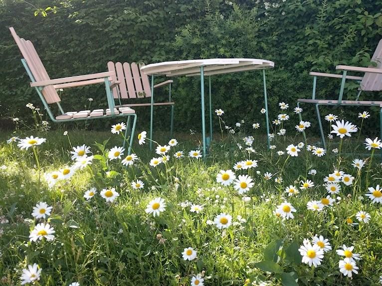 Renoverat grythyttan trädgårdsbord bord retro målat vitt fixat på plats i trädgården bland massor av prästkragar och ännu ej tillfixade stolar snett underifrån.