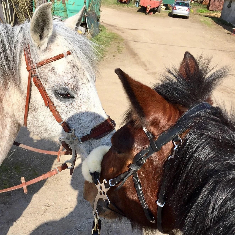 Skadad ponny