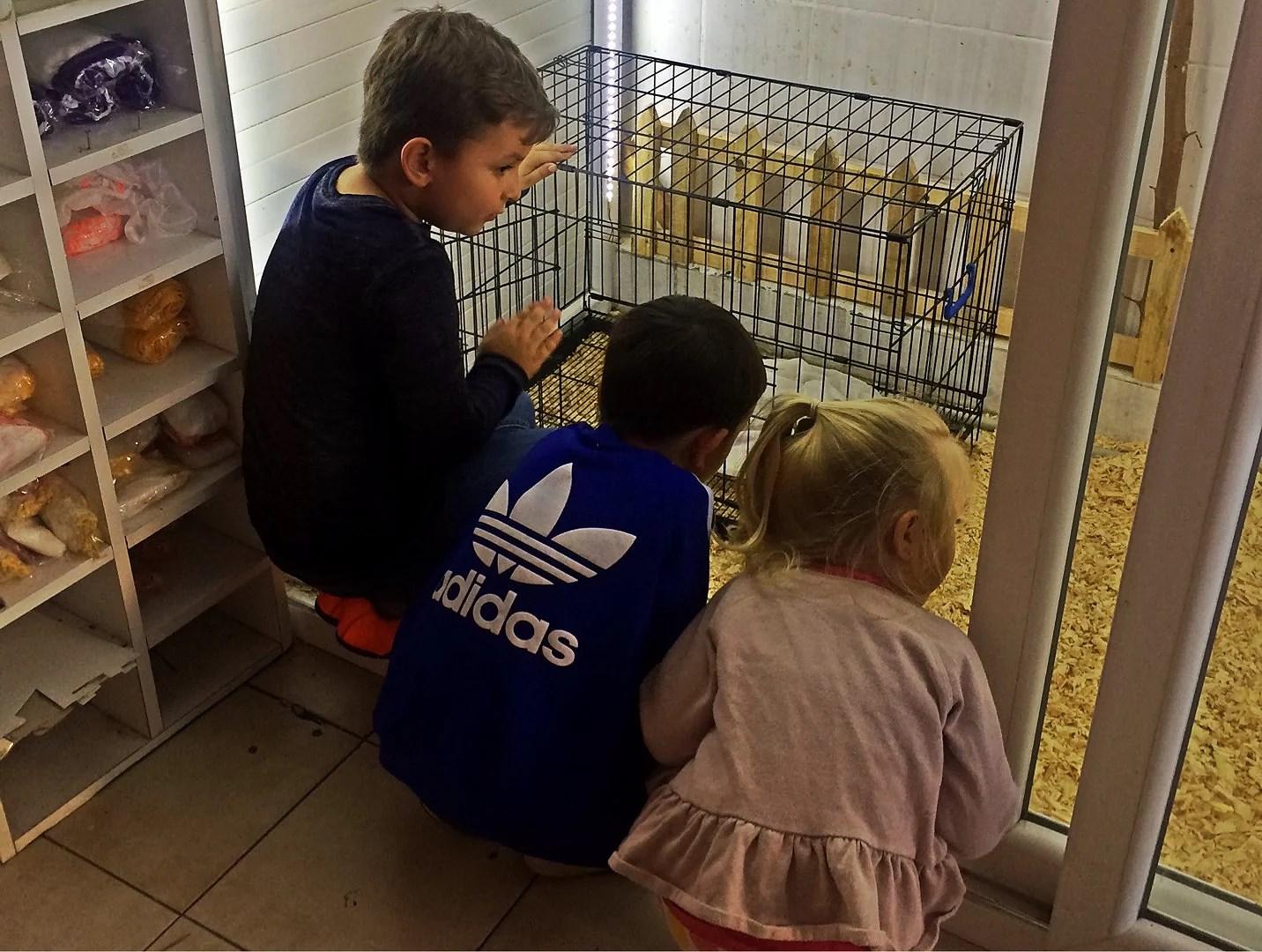 En tur på dyrebutikken