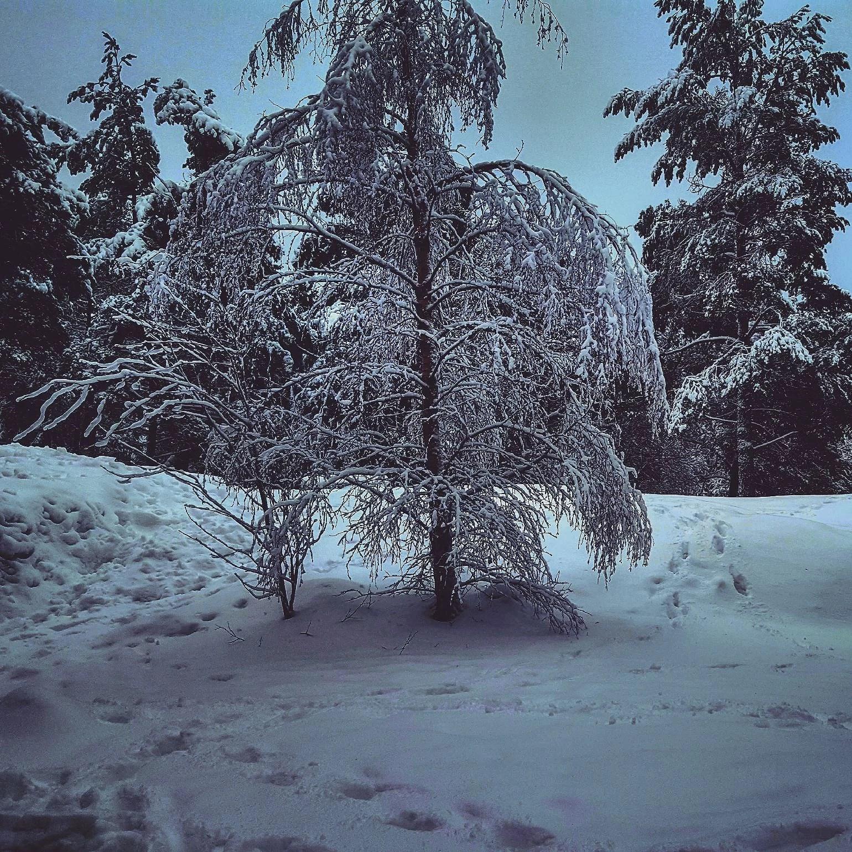 Vintern var kort!
