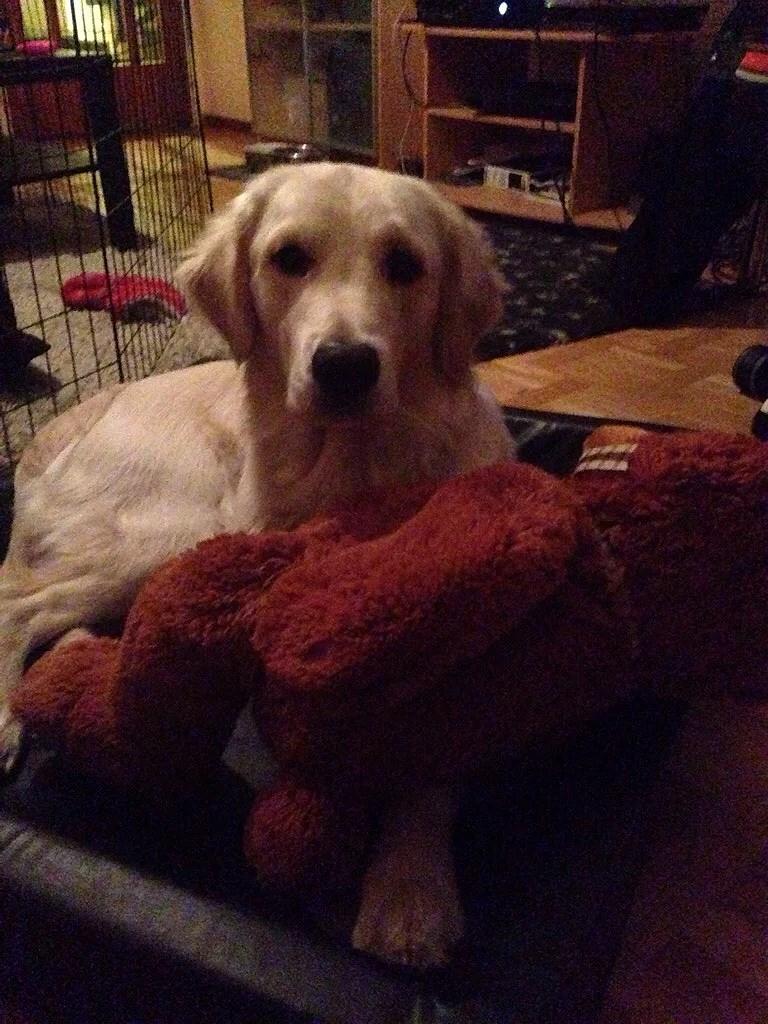 Födelsepresent...Teddy!!!
